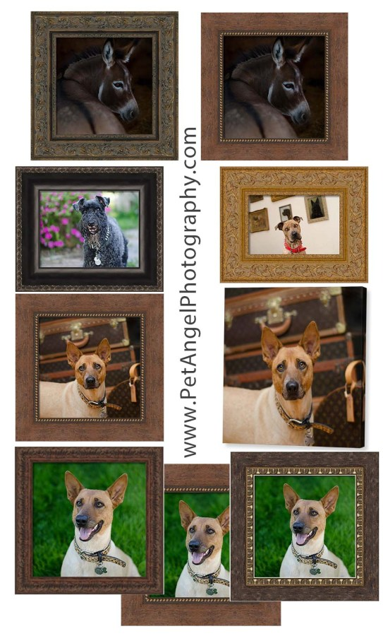 Your Pet Portrait in a Best Frame