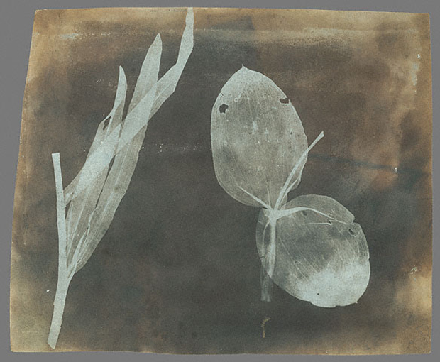 Archives of Influential Early Photographer Fox Talbot Get New Lease on Life  William Henry Fox Talbot   Leaves of Orchidea edited 1
