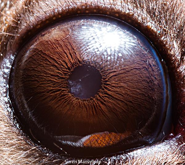Stunning Macro Photographs of Animal Eyes macroeye10