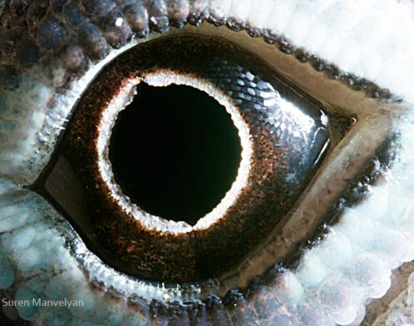 Stunning Macro Photographs of Animal Eyes macroeye12