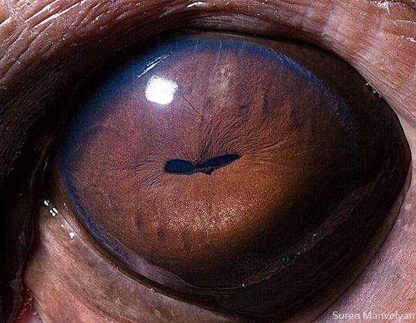Stunning Macro Photographs of Animal Eyes macroeye15