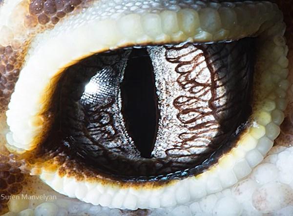 Stunning Macro Photographs of Animal Eyes macroeye2