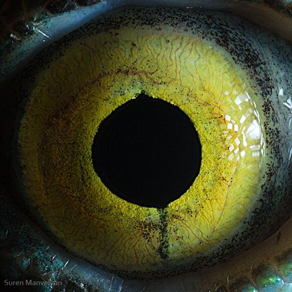 Stunning Macro Photographs of Animal Eyes macroeye3