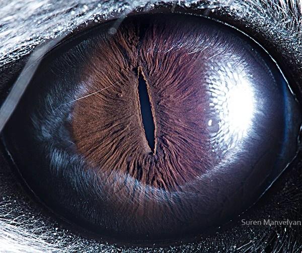 Stunning Macro Photographs of Animal Eyes macroeye4