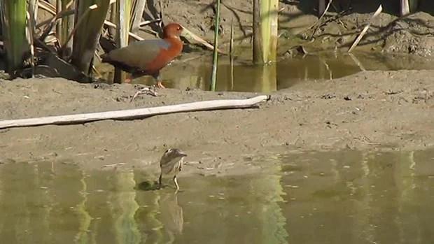 Birders Go Wild After Best Photobomb in History photobomb
