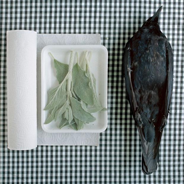 Peaceful Still Life Photographs Combine Kitchenware and Roadkill roadkill 16