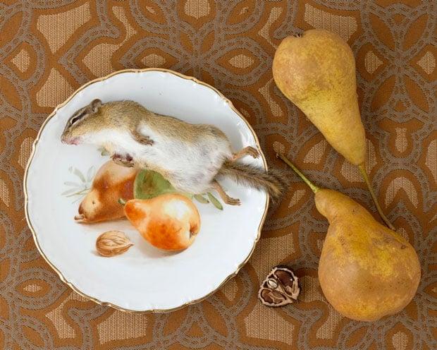Peaceful Still Life Photographs Combine Kitchenware and Roadkill roadkill 18