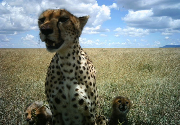 Camera Trap Images Offer a One of a Kind Look at Life on the Serengeti serengeti4