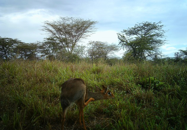 Camera Trap Images Offer a One of a Kind Look at Life on the Serengeti serengeti5