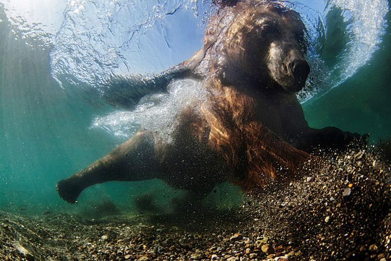 """""""Underwater fisherman."""" Mike Korostelev/UPY 2016"""