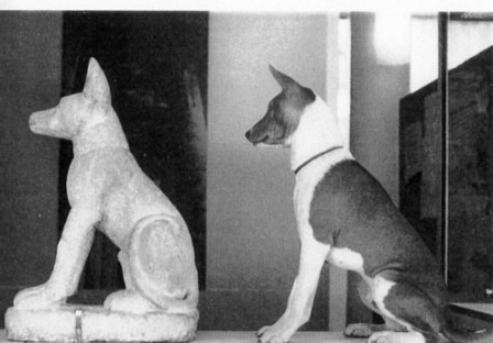 basenji Pharaohs of Egypt