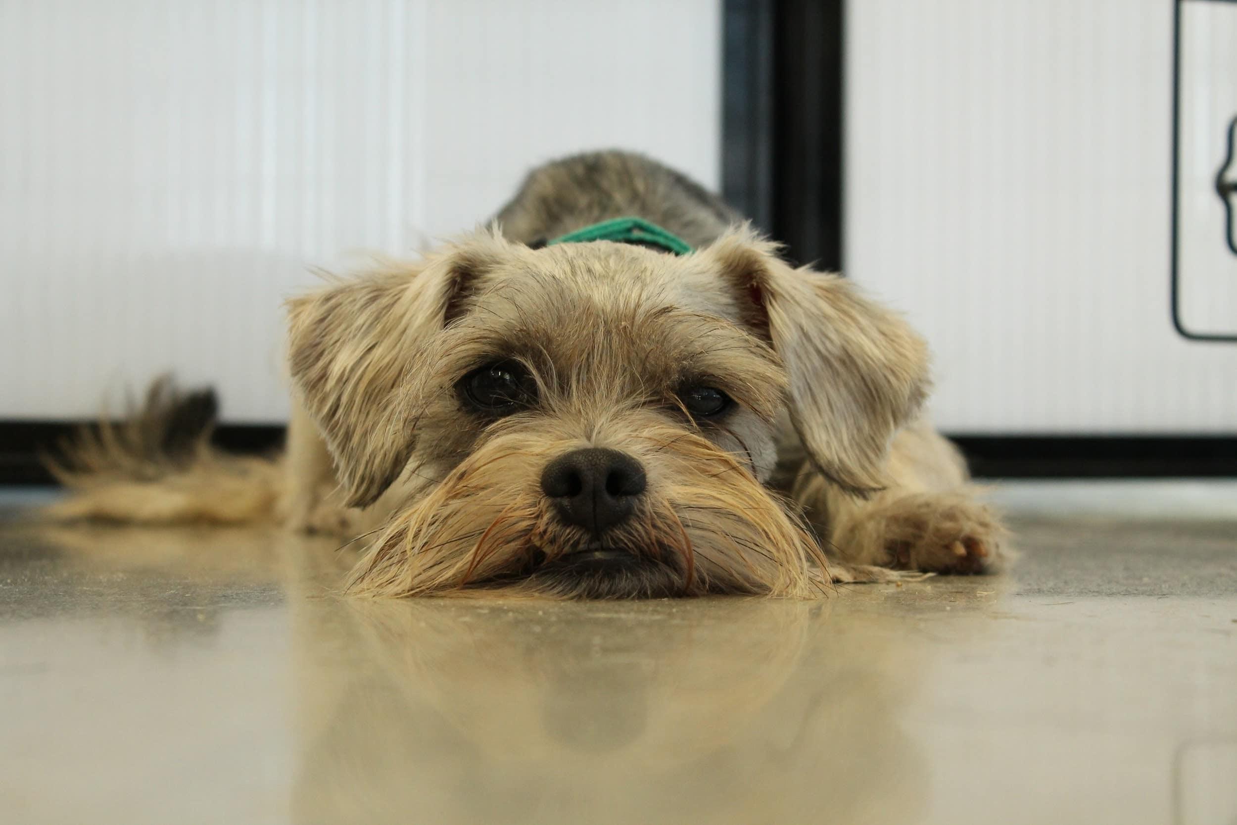 Sightly Ways To Keep Your Dog Active Blog Jenna Marbles Dogs Swim Jenna Marbles Dog Iq Test bark post Jenna Marbles Dog