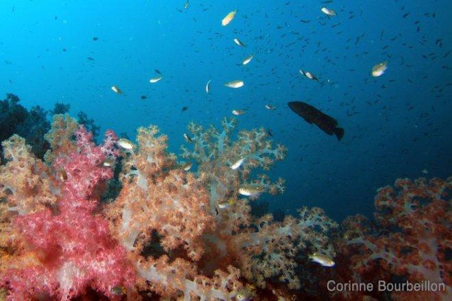 Richelieu Rock. Thaïlande, février 2011.