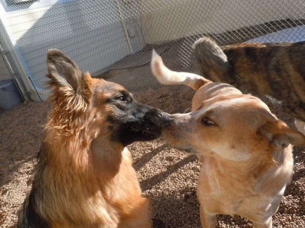 Dog Care for senior and special needs dogs