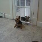Buddies at dog daycare