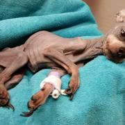 Dog unintentionally starved