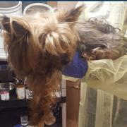 Senior dog found in garbage can