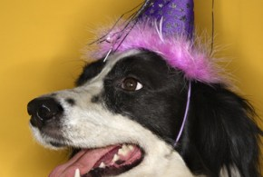 10 New Year's Resolutions for You and Your Dog