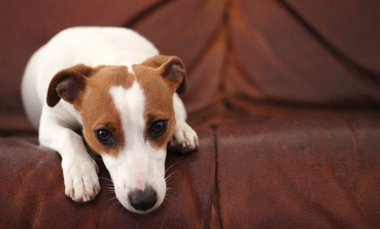 How to Help Dogs Overcome the Trauma of a Family Death