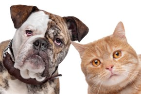 Are Our Cats Spreading Canine Parvovirus?