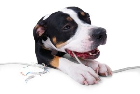 Why Dogs Develop Destructive Behaviours