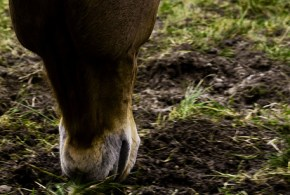 Dealing with Worms in Horses: Manage, Test, Plan, Dose