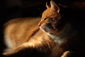 Neutering You Cat: Dealing with Increased Appetite Caused by Sterilisation