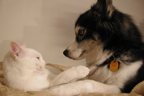 Cancer Treatment Options for Dogs and Cats