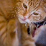 permethrin poisoning in cats with fleas
