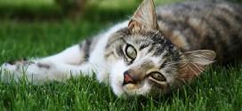 Feline Panleucopenia and Feline Parvovirus (FPV)