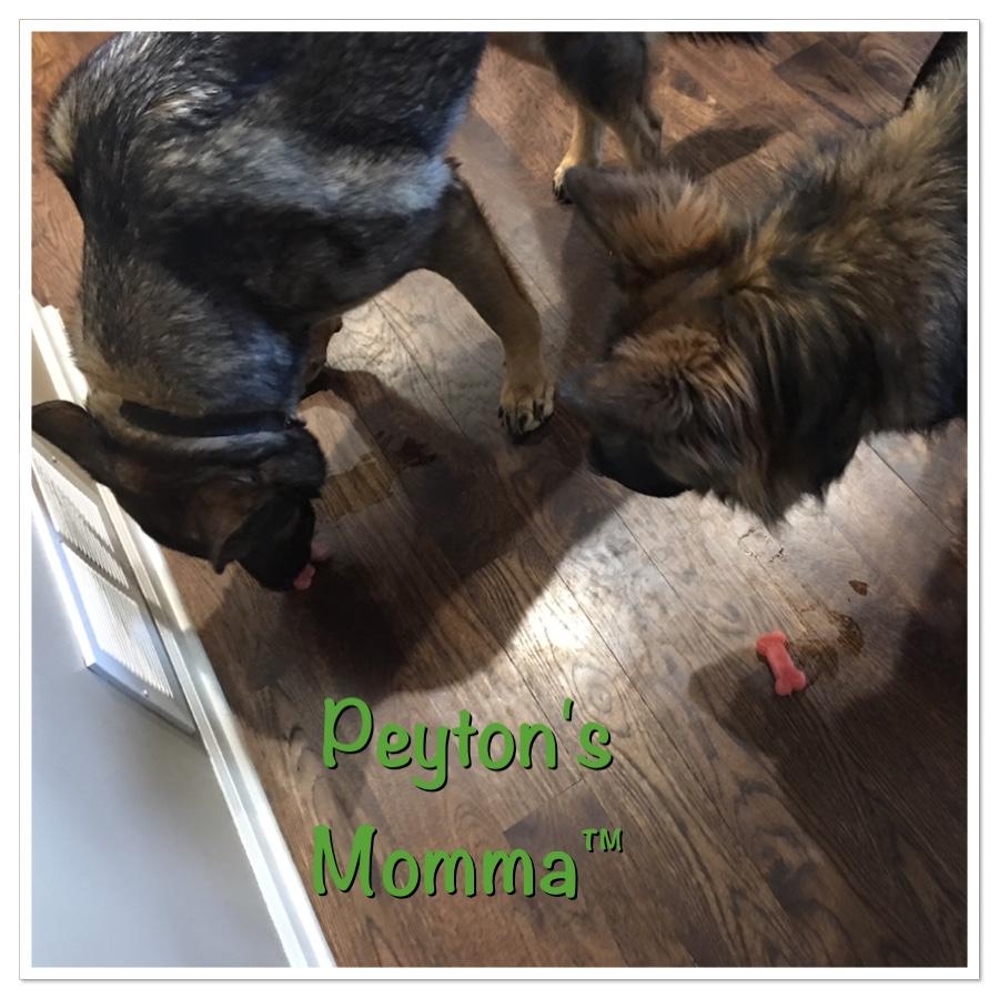 Finnegan and Matilda enjoying Frozen Watermelon Treats
