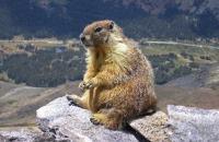Гора родила мышь: законодательные итоги года