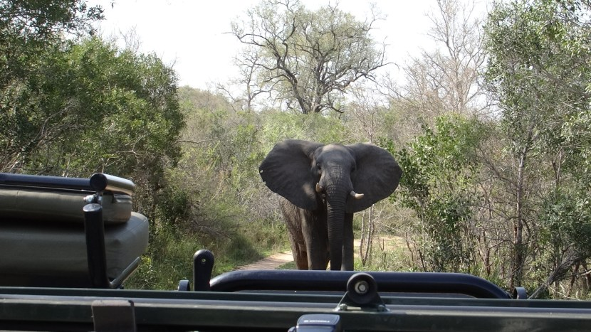 Elephant South Africa Safari
