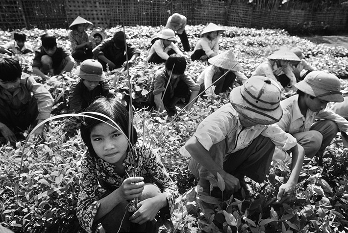VIETNAM. School children tending to a bed of saplings before transplanting. The country's reforestation program has afforded the opportunity to reaffirm the tradition of living symbiotically with nature that defines the people of Vietnam. 1987