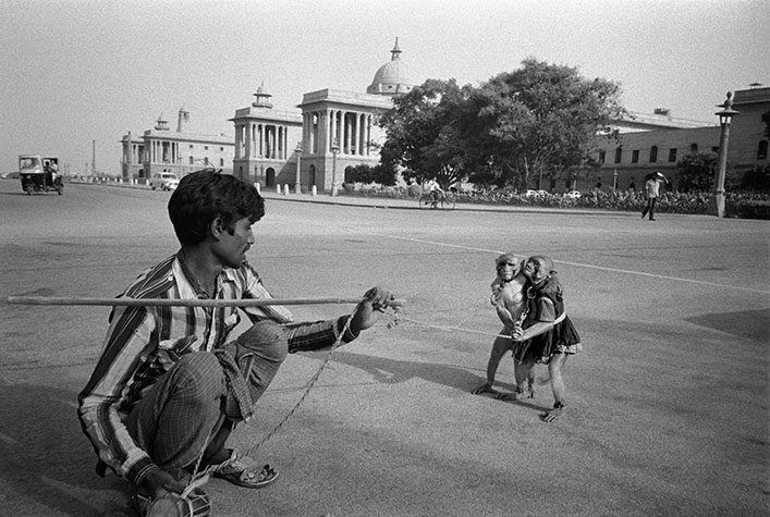 INDIA. Delhi. On Delhi's main thoroughfare, where generations of British paraded their colonial pomp and ceremony to convince the world of their invincibility, monkeys now perform for passers-by.1987