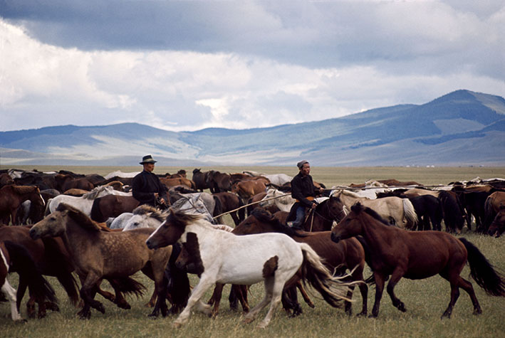 Mongolia, rounding up wild horses on the edge of the Gobi desert. Children are expert riders from an early age.