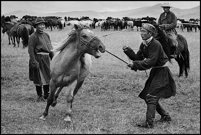 Mongolia, Breaking in horses on collective farm.