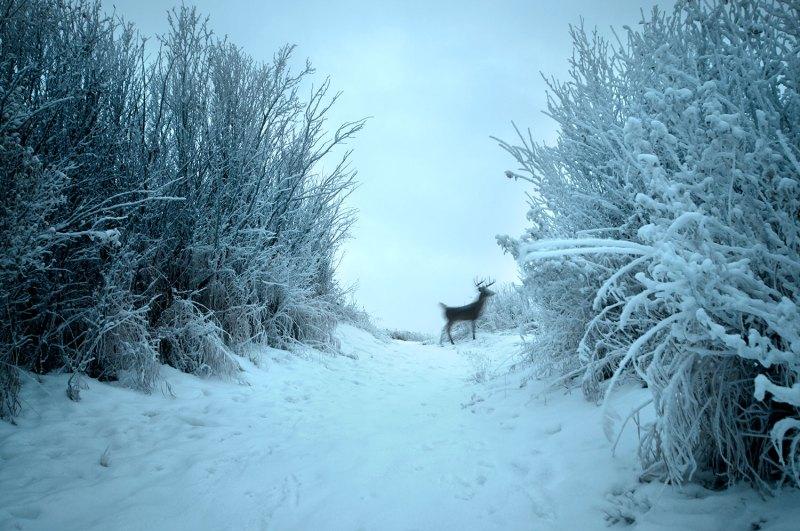 Philip kanwischer photography deer