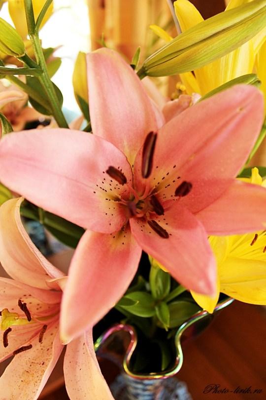 Наши лилии