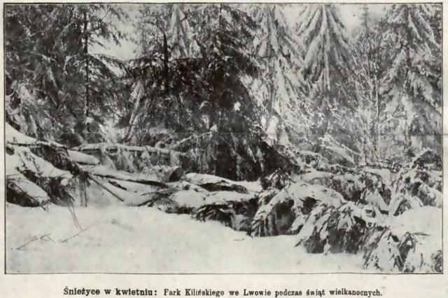 Парк Кілінського (Стрийський парк) 10 квітня 1912 року. Фото 1912 року