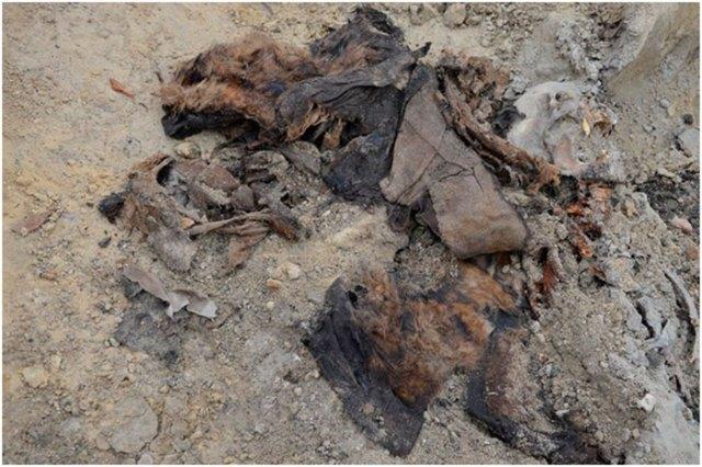 Залишки плаща, підбитого хутром, які збереглись на одному з останків. Фото – Михайло Возняк.