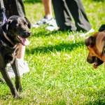 Dogs Need to Walk Too - Dayton Photographer Alex Sablan