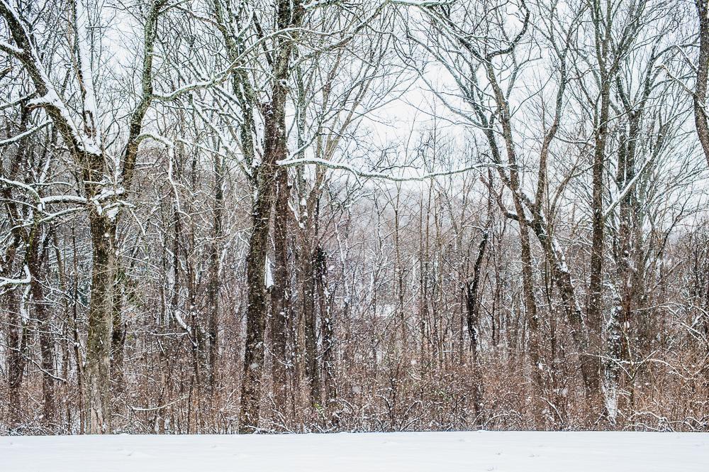 Snow_Day_0004_160209