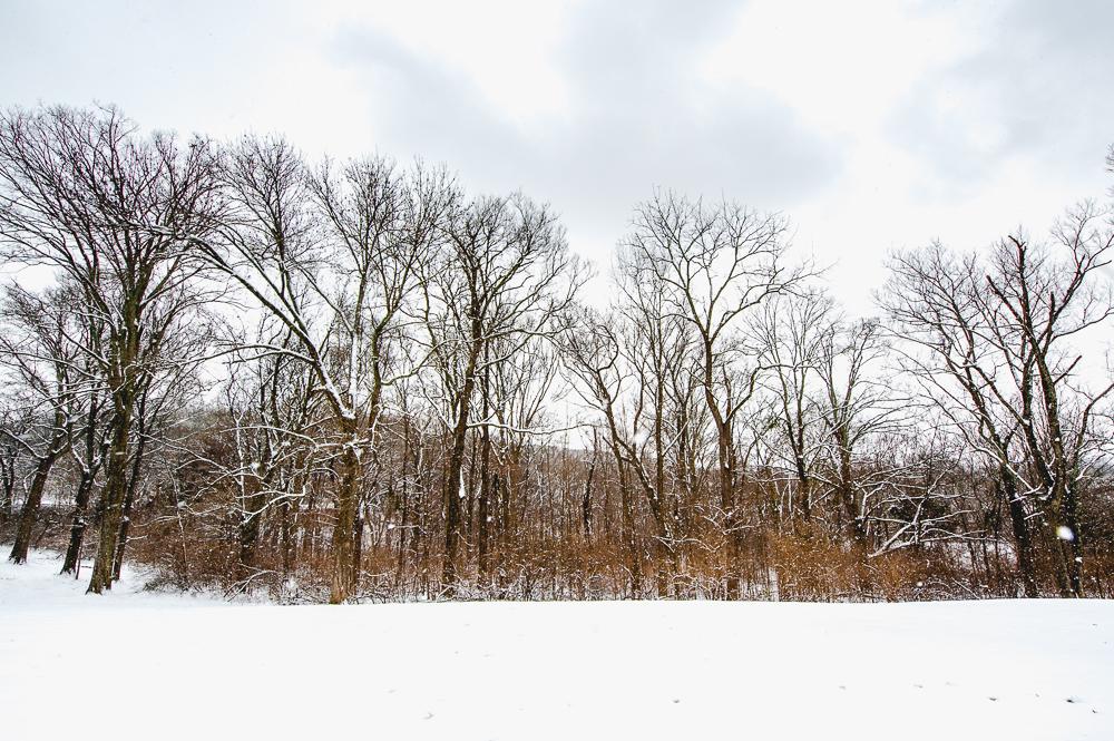 Snow_Day_0005_160209