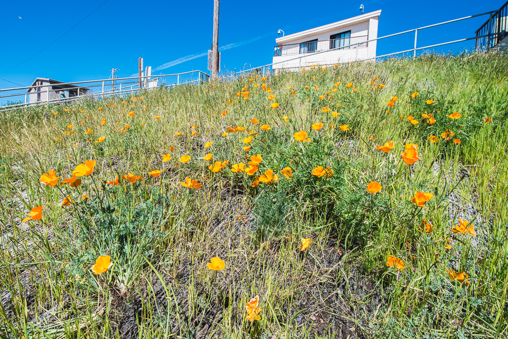 PCH_Day_2_0015_160315