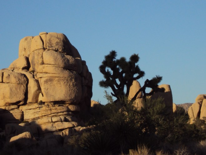 The silhouette of a Joshua Tree near a boulder formation.