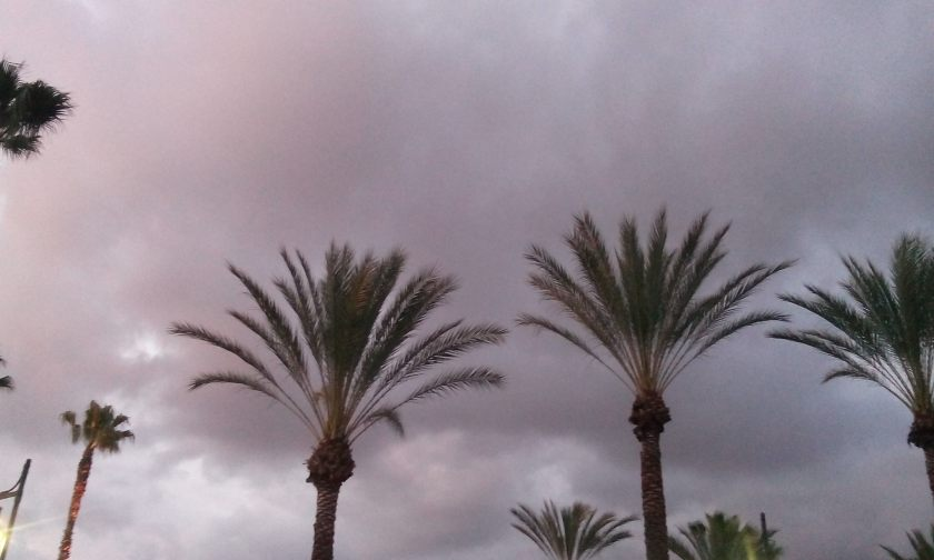 Palm Trees And Rain Clouds