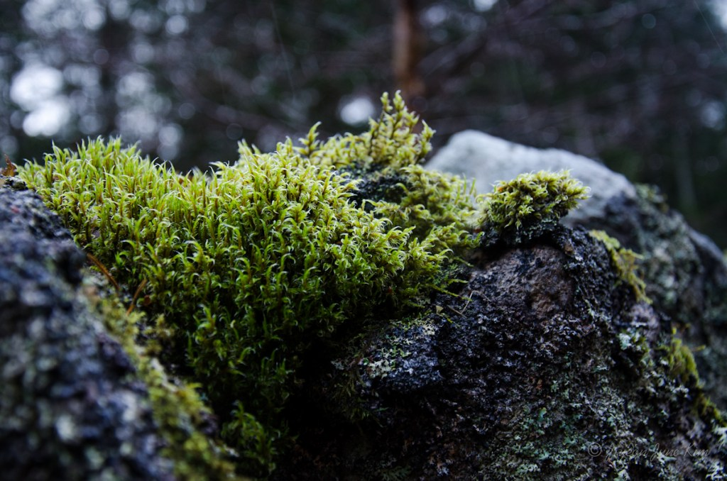 Moss on the stone wall