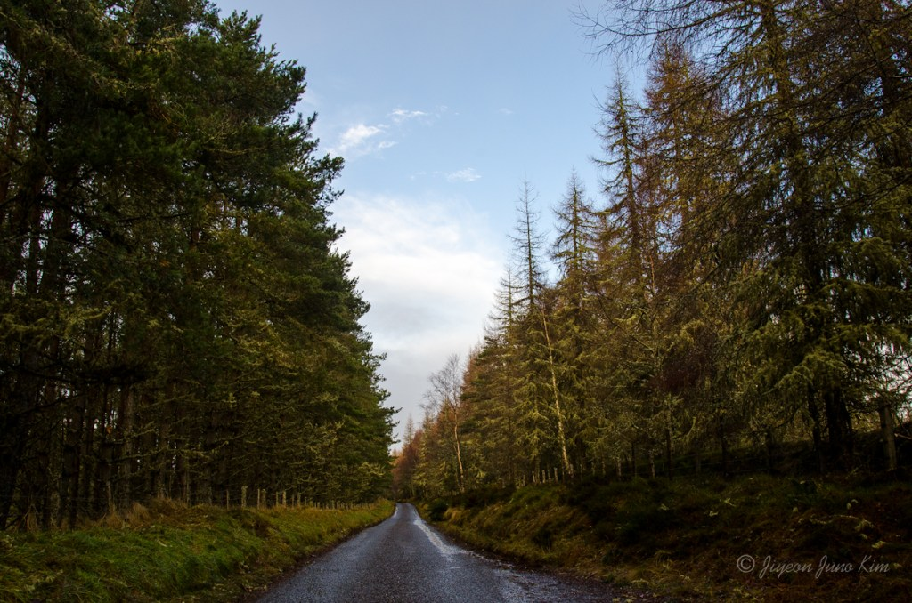 Country road in the Highlands