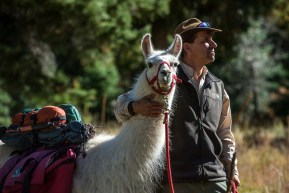 Stuart Wilde, of Wild Earth Llama Adventures, poses for a portrait with his llama Picchu near Columbine Campground